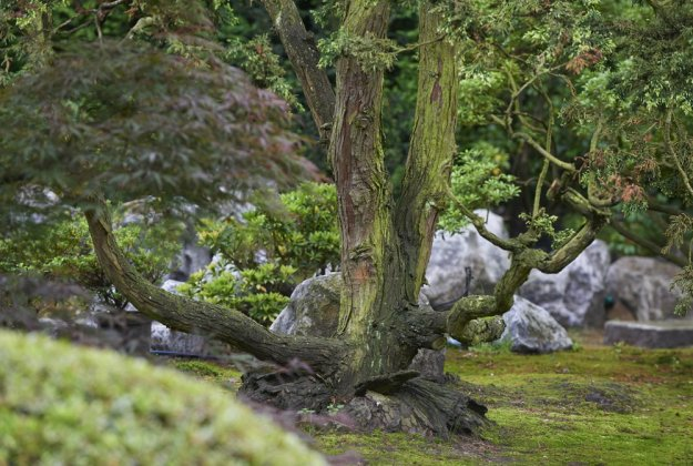 Japanse Tuin 6