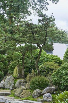 Japanse Tuin 8